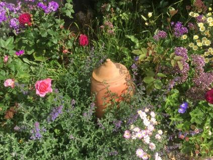 Rhubarb forcer in back border