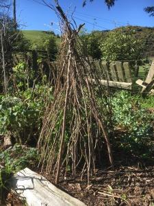 Sweet peas - Heritage Garden